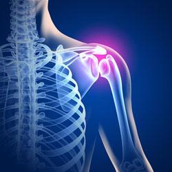 Stem Cells Grow Bone