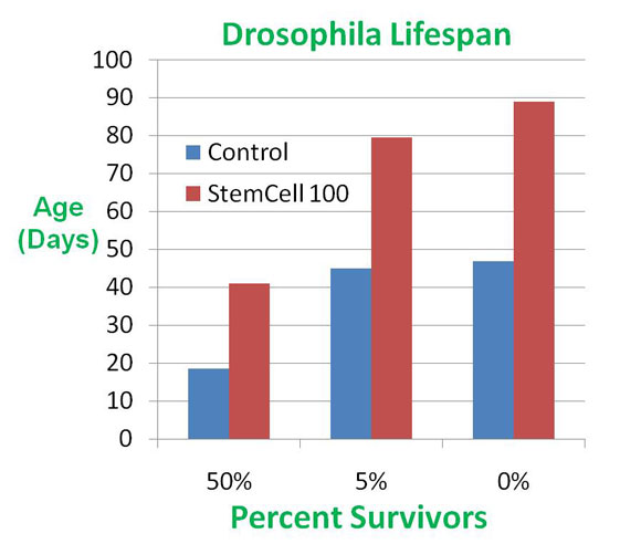 Drosophila Lifespan with Stem Cell 100